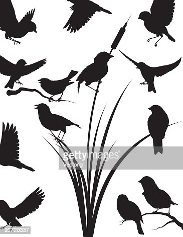 Sparrow Silhouette Vector Art | Getty Images