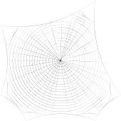 Spiderweb. Isolated on white background. Sketch illustration.