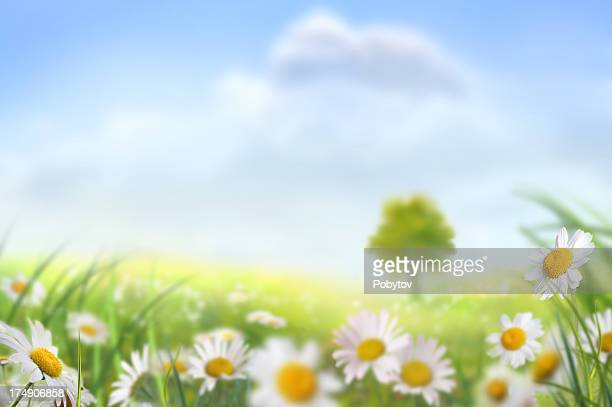 Spring Meadow With A Lone Tree