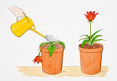 Straight-stemmed red flower growing in terracotta pot, identical potted flower droopingly wilting being watered with yellow watering can