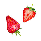 Strawberries isolated on white background, watercolor illustration in hand-drawn style.