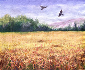 Hand drawn watercolor illustration. Nature landscape.  Summer view of the wheat field, trees and flying birds.
