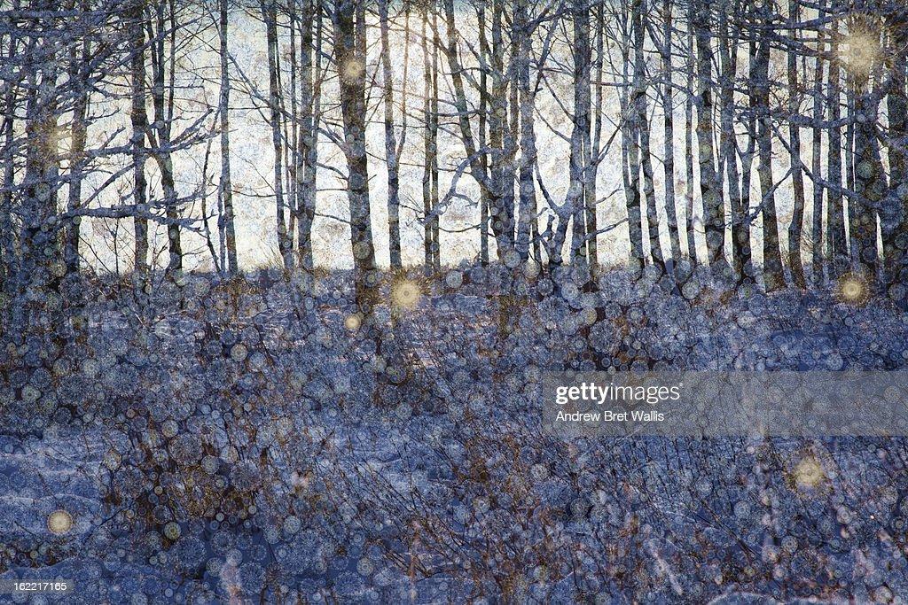 Sunlight glints across snow in a winter woodland : Stock Illustration
