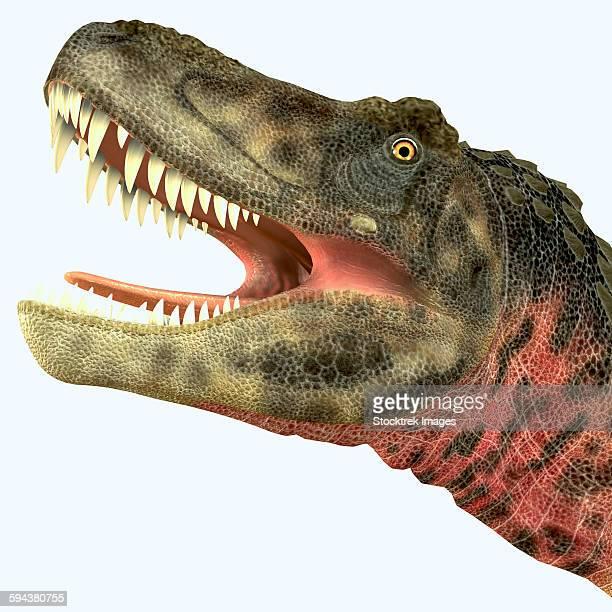 Tarbosaurus dinosaur roaring.