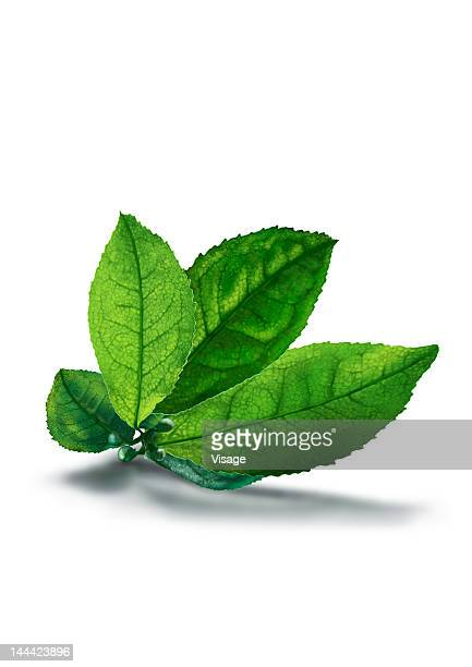 Tea leaf, Cut-out
