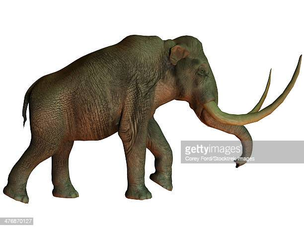The Columbian mammoth is an extinct species of elephant that inhabited what is now the Americas in the Pleistocene Age.