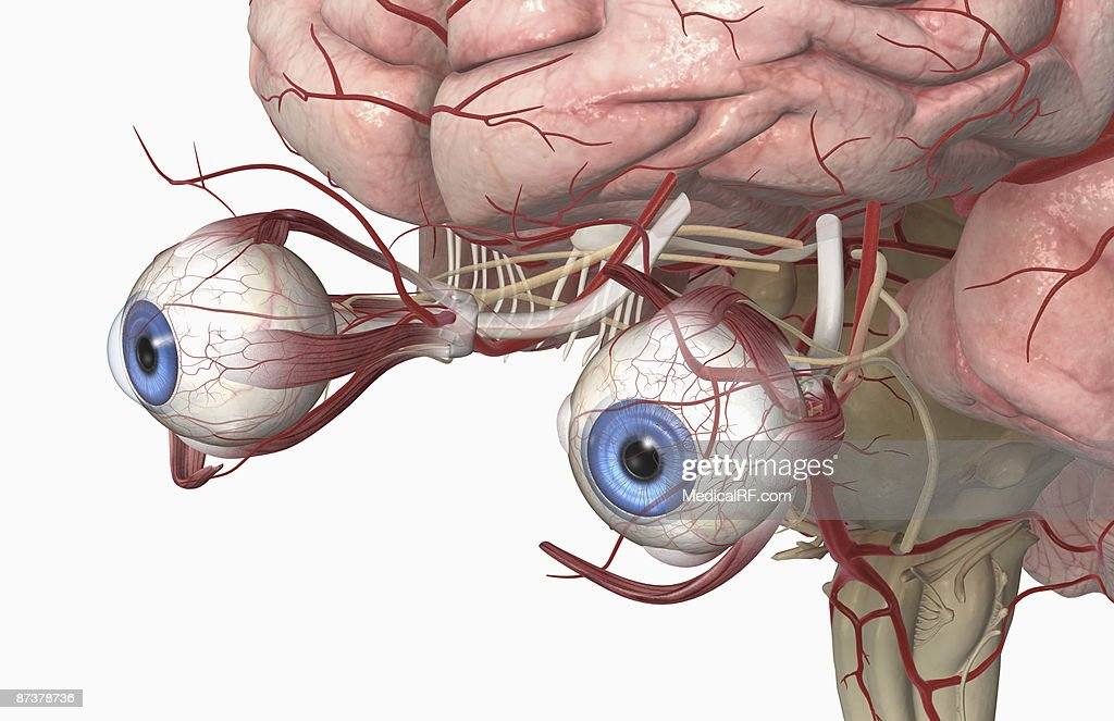 The External Anatomy Of The Eye Stock Illustration Getty Images