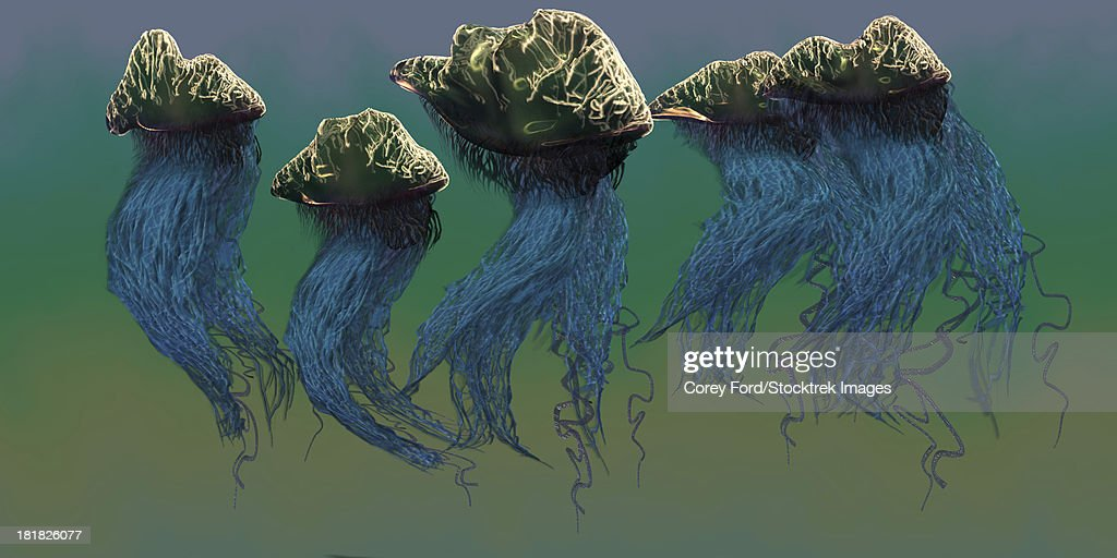 The Portuguese Man O War Is A Dangerous Jellyfish Which Stings Its Prey With Poisonous Tentacles