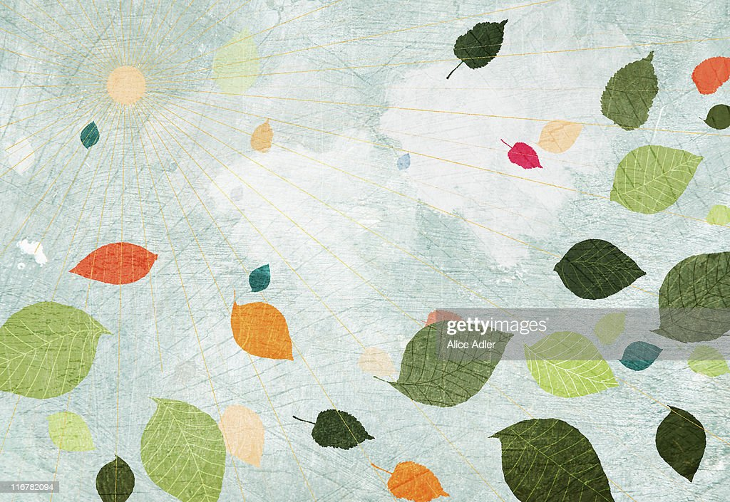 The sun and floating leaves : Stock Illustration