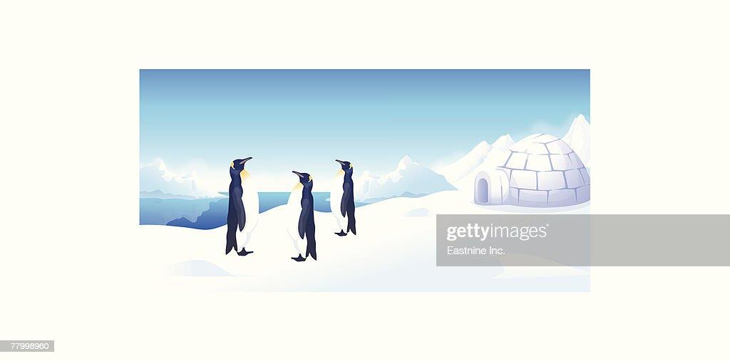 Three penguins standing near an igloo : Vector Art