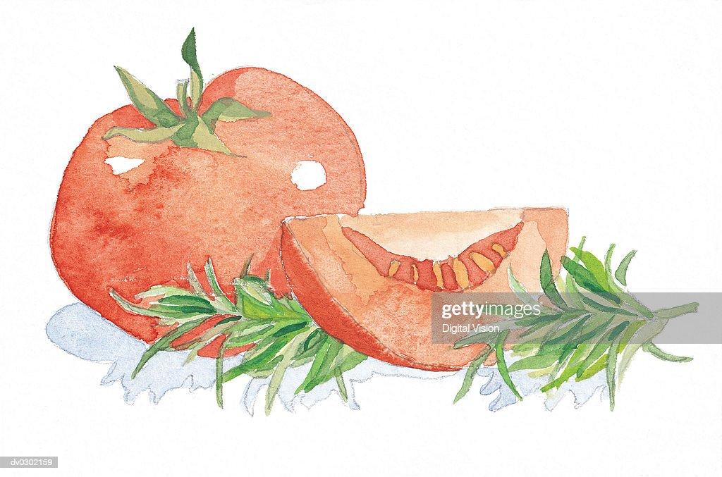 Tomato Garnished with Rosemary : Stock Illustration