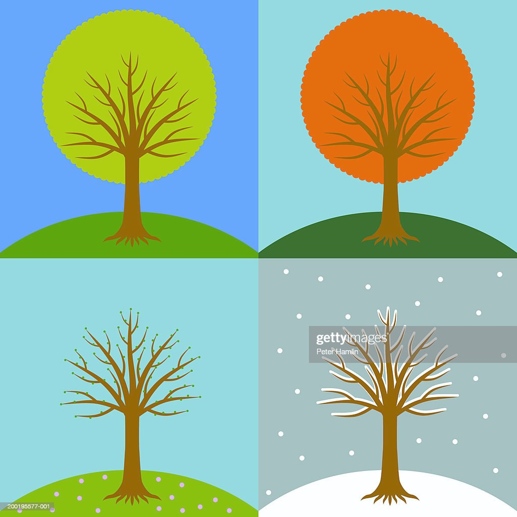 Tree in four different seasons : Stock Illustration
