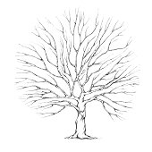 Illustration of a Tree with big tree crown