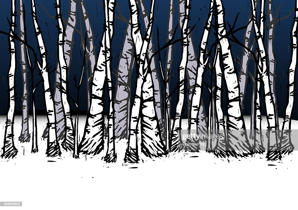 Trees in a forest : Stock Illustration