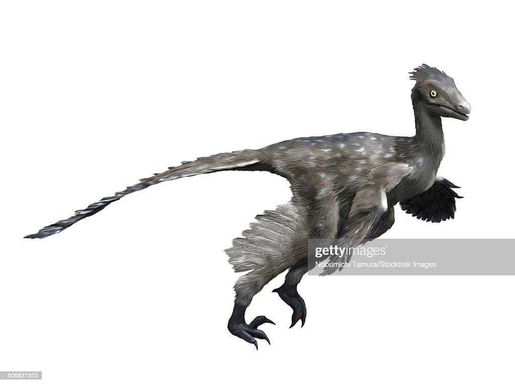 troodon dinosaur white background stock illustration getty images