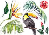 Tropical set with a toucan, palm leaves, strelitzia and hibiscus flowers. Watercolor on white background. Isolated elements for design.