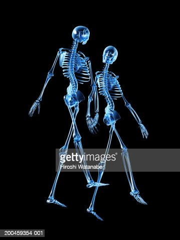 two human skeletons walking and holding hands stock illustration, Skeleton