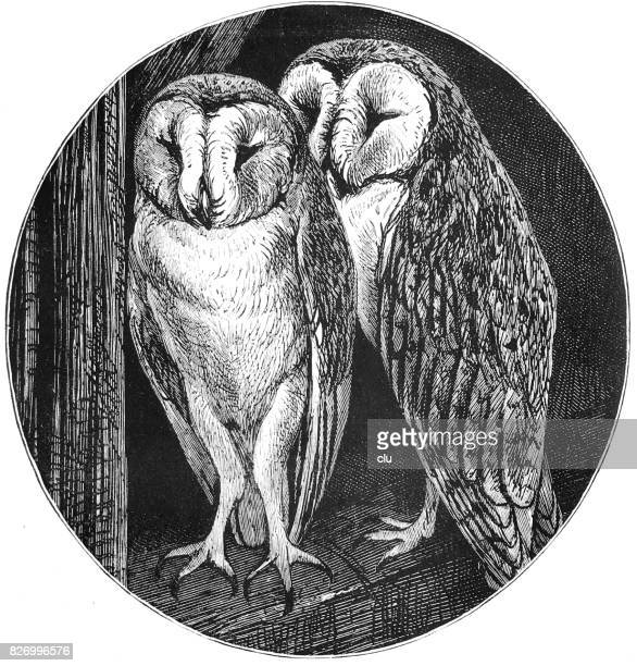 Two owls portrait