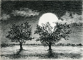 Two trees in the moonlight