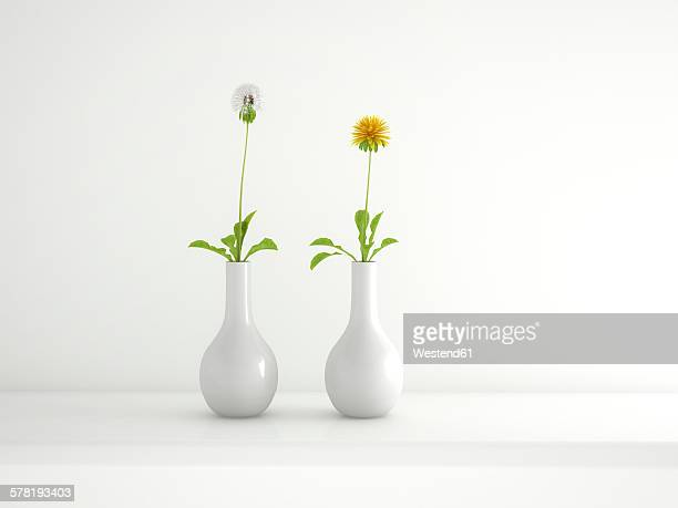 Two white flower vases with blowball and dandelion, 3D Rendering