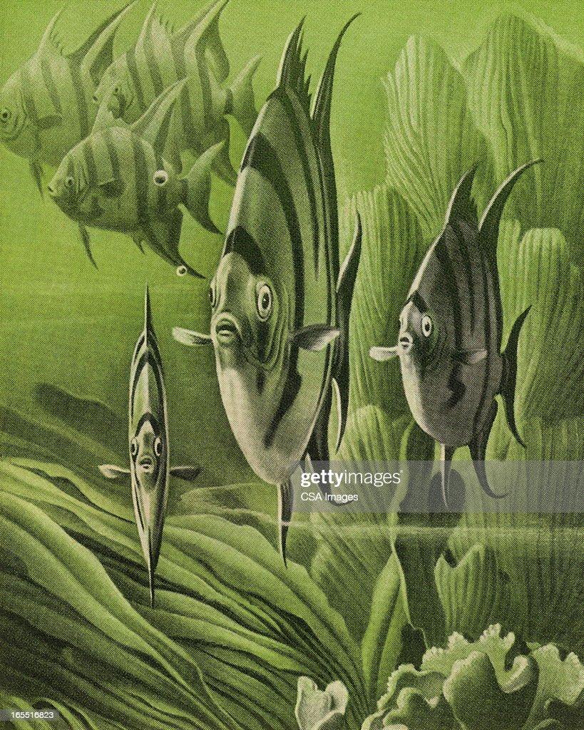 Underwater Sea Life : Stock Illustration