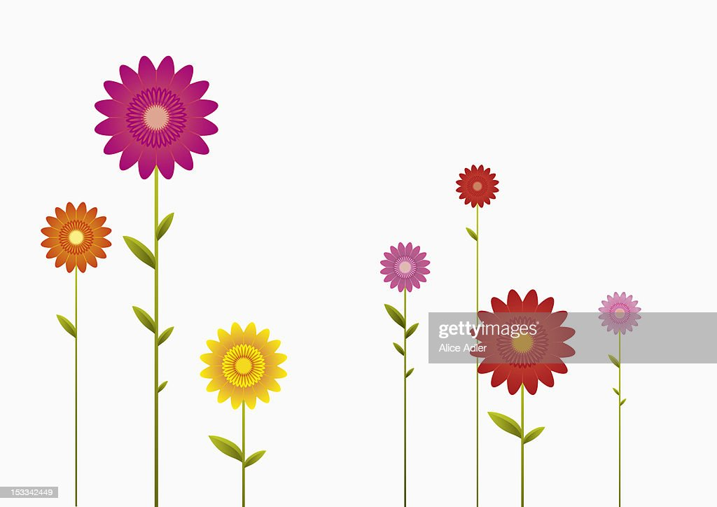 Various colors and sizes of Gerbera Daisies in a row : Stock Illustration