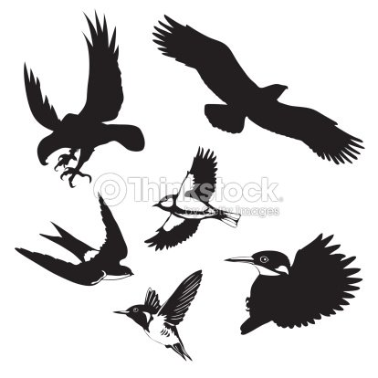Vector Illustration Of The Birds On White Background