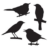 vector silhouettes of the birds sitting on branch tree