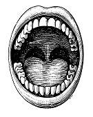 """""""Antique medical illustration depicting open mouth and teeth. Published in Systematischer Bilder-Atlas zum Conversations-Lexikon, Ikonographische Encyklopaedie der Wissenschaften und Kuenste (Brockhau"""