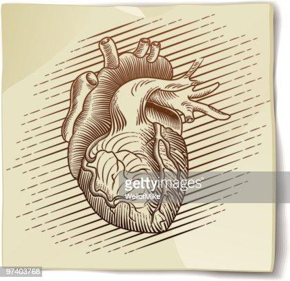 on human heart essay on human heart