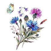 Watercolor bouquet of summer wildflowers. Drawn cornflower, thistle, bellflower, meadow herbs and butterfly. Botanical illustration in vintage style. Floral decoration. Country, shabby chic design.