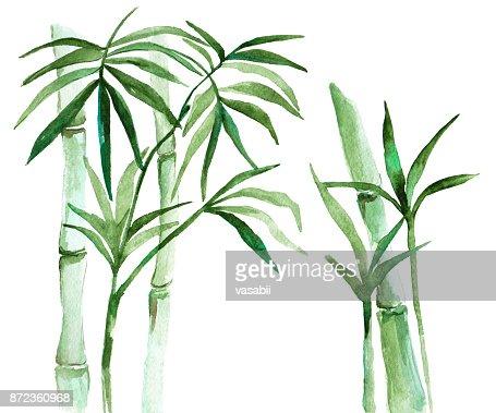 Aquarell Bambus Abbildung Stock Illustration Thinkstock