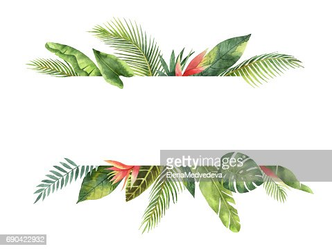 Watercolor banner tropical leaves and branches isolated on white background. : Stock Illustration