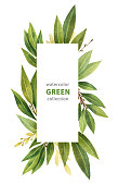 Watercolor Bay leaf vertical rectangular wreath isolated on white background. Hand drawn organic products for design of healthy food, invitations, greeting cards.