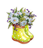 Watercolor bouquet of spring flowers chamomiles in rubber boots. Isolated on white background. Hand drawn illustration.