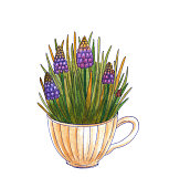Watercolor bouquet of spring flowers in a watering can. Muscari and leaves in a tea Cup. Isolated on white background. Hand drawn illustration.