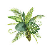 Watercolor bouquet tropical leaves and branches isolated on white background. Illustration for design wedding invitations, greeting cards, postcards. Spring or summer flowers with space for your text.