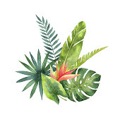 Watercolor bouquet tropical leaves and flowers isolated on white background. Illustration for design wedding invitations, greeting cards, postcards.