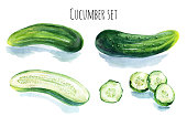 Watercolor cucumber set isolated on white background. Hand painted illustration