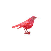 watercolor drawing red bird, hand drawn songbird at white background, isolated painting element