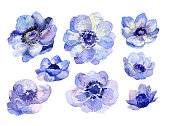 Watercolor hand drawn flower buds set, aquarelle floral elements for wedding card decoration. Anemone plants collection