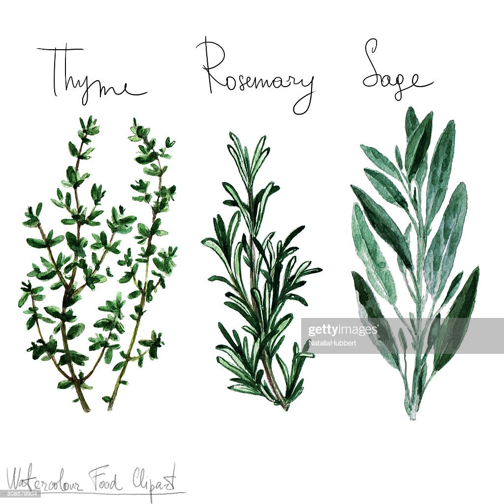 Watercolor Food Clipart - Herbs : Illustrationer