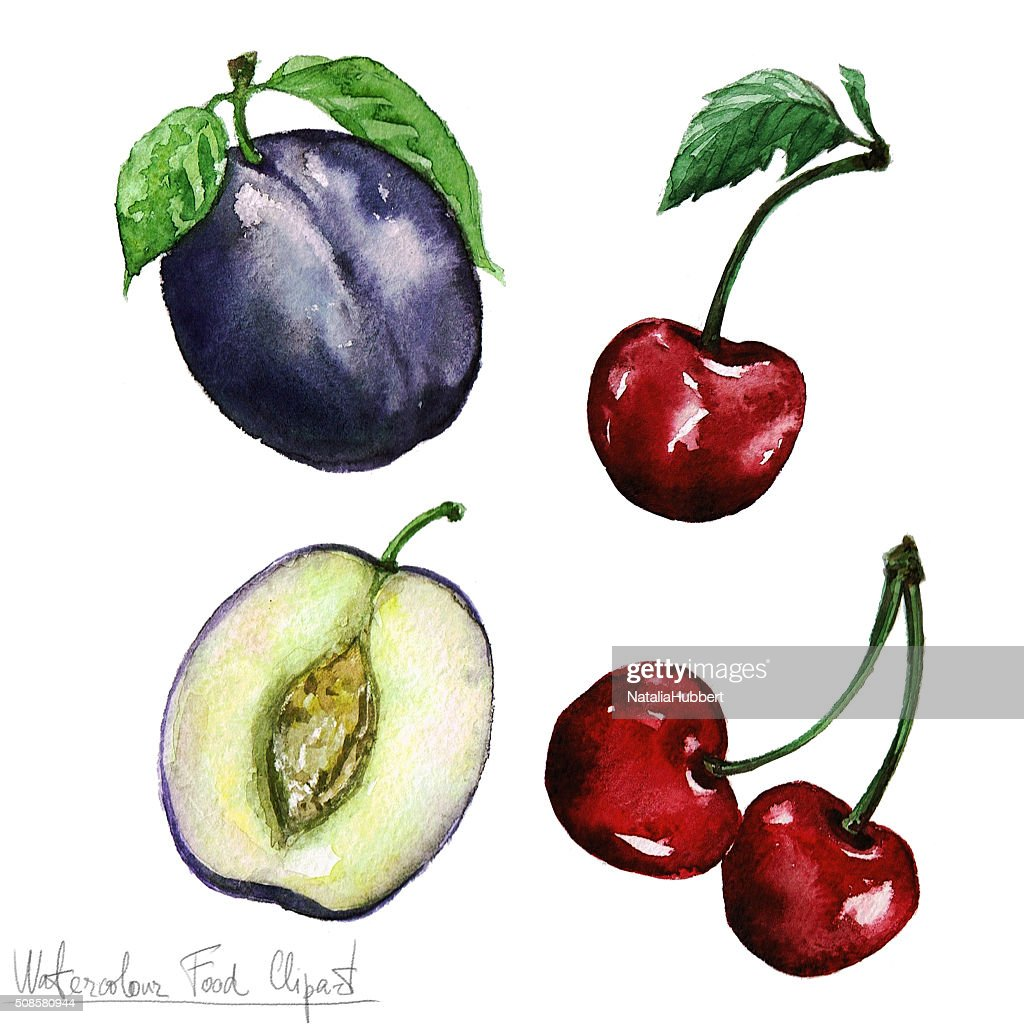 Watercolor Food Clipart - Plum and Cheery : Stock Illustration