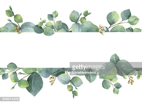 Watercolor green floral card with silver dollar eucalyptus leaves and branches isolated on white background. : Stock Illustration