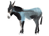 Watercolor illustration of a donkey