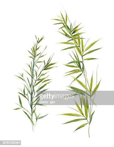 Aquarell Bild Bambus Blatter Auf Weissem Hintergrund Stock