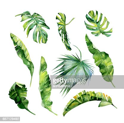 Watercolor illustration of tropical leaves, dense jungle. Hand painted. : Stock Illustration