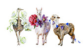 Funny watercolor of brown alpaca with blue small flags decoration and cute cartoon llama with purple pasque-flower and pink peony illustration. Cute ostrich with white orchid hand-drawn illustration.