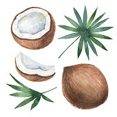 Watercolor organic set of coconut and palm trees isolated on white background. Hand painted illustration for design kitchen, bio food, menu, healthy eating, market.