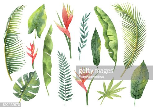 Watercolor set tropical leaves and branches isolated on white background. : Stock Illustration